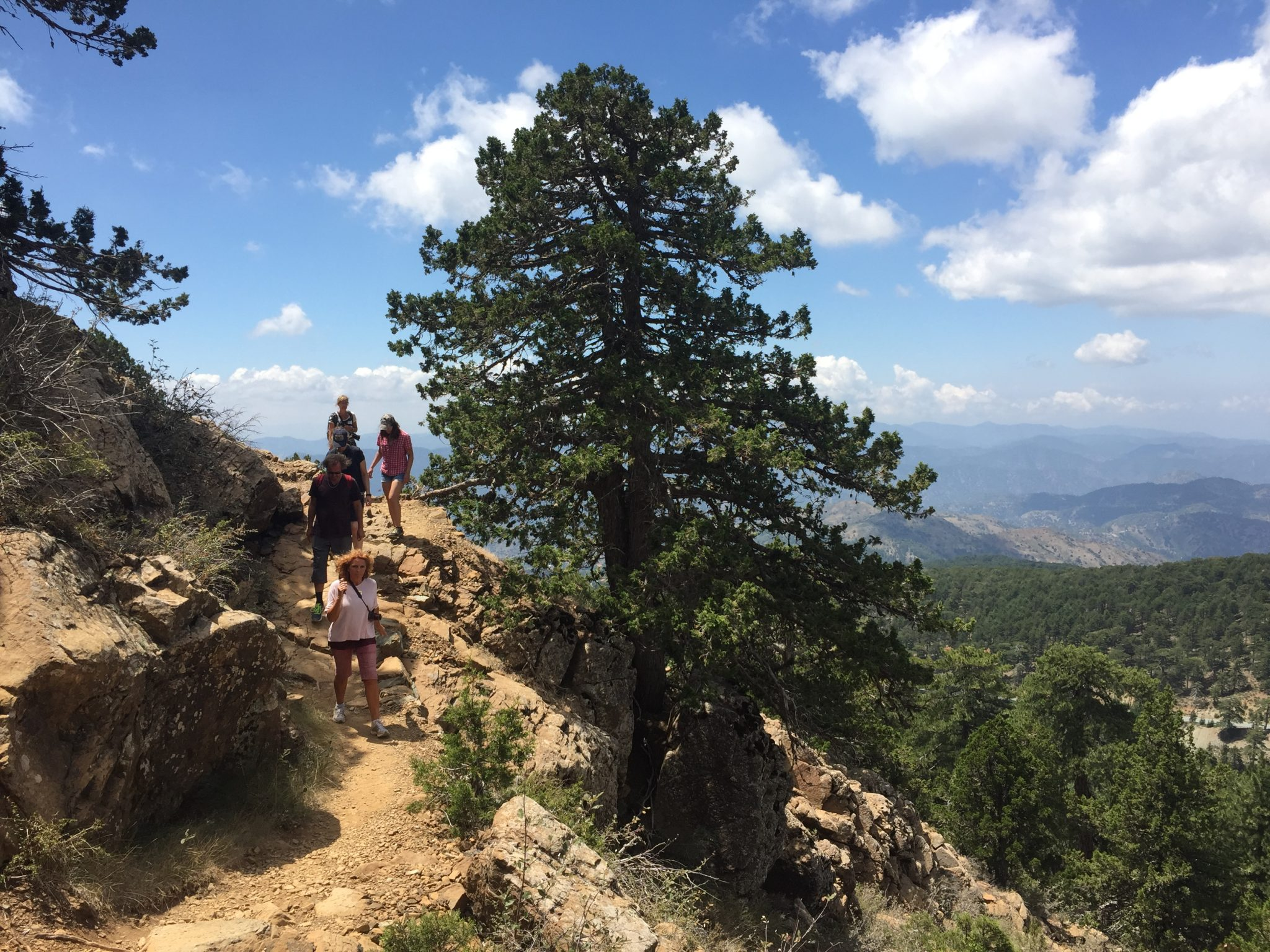Wandern, Wanderung, Zypern, Olymp, Olympos, Troodos, Höchster Berg Zyperns, Ausflug, Kultur, Kulturausflug, Kulturreise, Natur, Naturausflug, Wald, Ophiolith, Troodos-Ophiolith, Jalos Activ Excursion, wandern auf zypern, wandernaufzypern.de